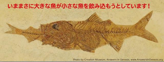 魚の化石|瞬間的な埋没の証拠