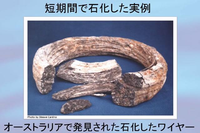 短期間で石化した事例|オーストラリアの石化したワイヤー