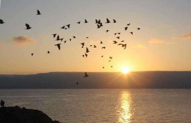 地の塩、世の光|山上の垂訓