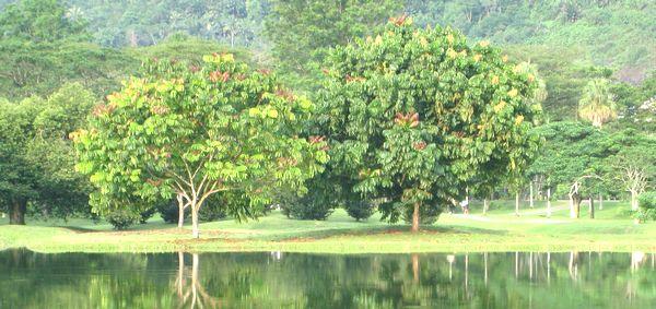 命の木と善悪の知識の木
