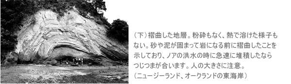 (下)褶曲した地層。粉砕もなく、熱で溶けた様子もない。砂や泥が固まって岩になる前に褶曲したことを示しており、ノアの洪水の時に急速に堆積したならつじつまが合います。人の大きさに注意。 (ニュージーランド、オークランドの東海岸)