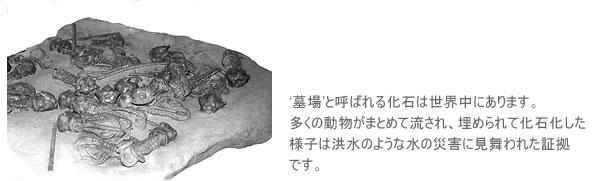 '墓場'と呼ばれる化石は世界中にあります。多くの動物がまとめて流され、埋められて化石化した様子は洪水のような水の災害に見舞われた証拠です。