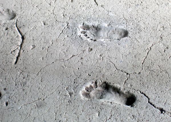 人間の足跡の化石