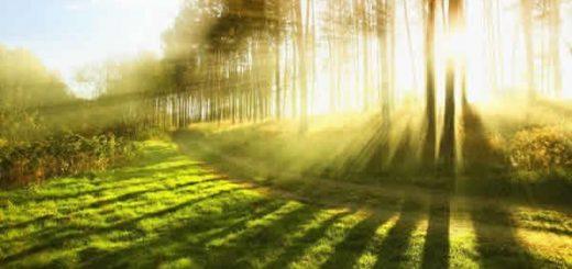 千年王国~キリストが実現する神の国|聖書が預言する人類の未来
