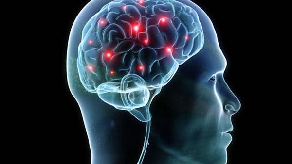 遺伝的要因:脳の構造の違い