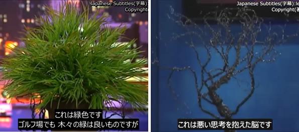 良い考えによる神経細胞の木と、悪い考えによる木との比較