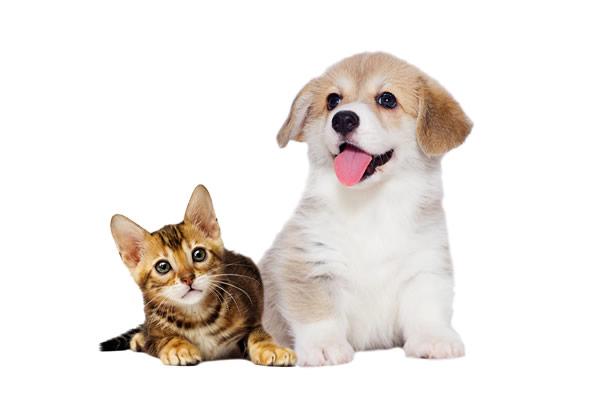 神は動物(ペット)の病を癒やされますか?聖書の疑問